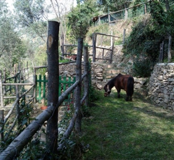 Cheap country house in Alassio
